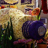 Zájezdy na květinová korza do Holandska / Nizozemska (Keukenhof)