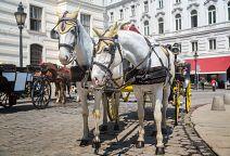 To nejlepší z Vídně + BUDAPEŠŤ (autobusem)