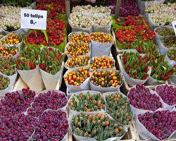 Květinový trh v Amsterdamu