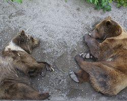Bernský Medvědí park