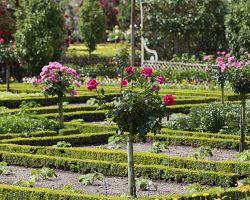 Zahrady zámku Villandry