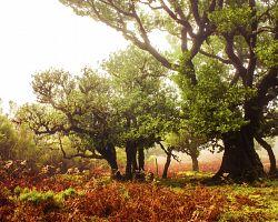 Pohádkový les na Madeiře