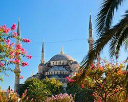 Modrá mešita v jarním hávu