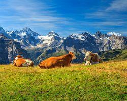 Typická švýcarská momentka