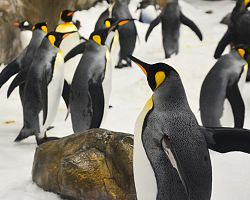 Akvárium - tučňáci