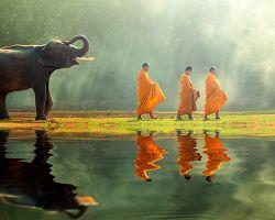 Slon s mnichy v Thajsku