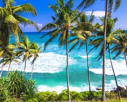 Srí Lanka je tropický ráj