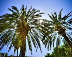 Přímořská atmosféra a tradiční palmy