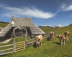 Tradiční dřevěné chaty na Velike planině