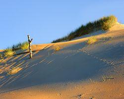 Písečné duny Łebské Sahary