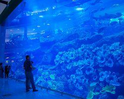 Obří akvárium v nákupním centru Dubai Mall