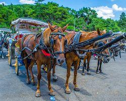 Projížďka kočárem po ostrově Büyükada