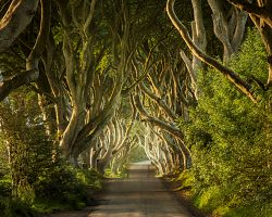 Buková alej Dark Hedges