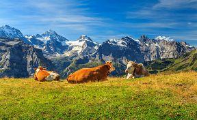 Ilustrace Švýcarsko