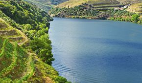 Cesta vína na řece Douro