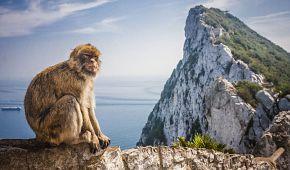 Volně žijící makakové