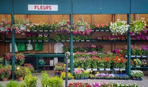 Květinové trhy Marché aux fleurs u katedrály Notre Dame