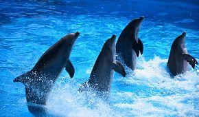 Delfíní show v Marinelandu v Antibes