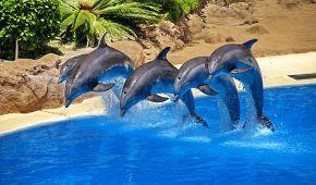 Delfíní show na Floridě