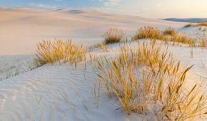 Písečné duny Lebské Sahary