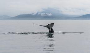 Výlet za pozorováním velryb