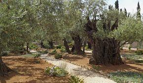 Getsemanská zahrada na Olivové hoře