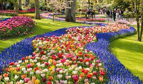 Vyhlášené květinové zahrady Keukenhof