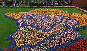 Obrazy z květin v Keukenhofu
