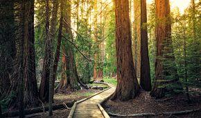 Západ slunce v národním parku Sequoia