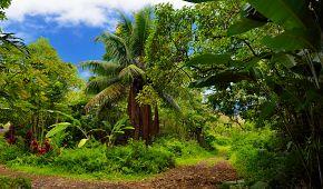 Krásná tropická příroda Havaje