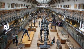 Expozice v Přírodovědeckém muzeu v Jardin des plantes