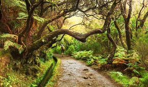 Madeirské levady