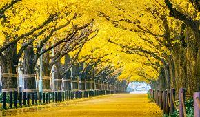 Podzimní park v Tokiu