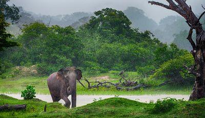 To nejlepší ze Srí Lanky + NÁRODNÍ PARKY + TROPICKÉ PLÁŽE