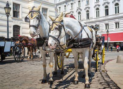 To nejlepší z Vídně + BUDAPEŠŤ