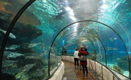 """""""Žraločí"""" tunel - Akvárium Barcelona"""