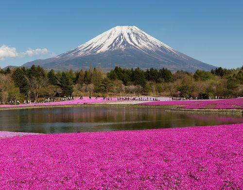 Festival vůní v Japonsku