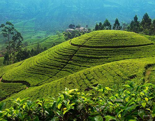 Poleťte zažít srílanský ráj