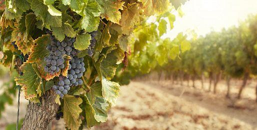 Zájezdy za vínem do Švýcarska