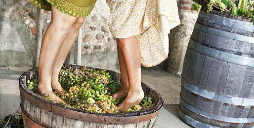 Zájezdy za vínem na Madeiru