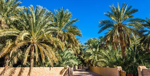 Poznávací zájezdy do Al Ainu
