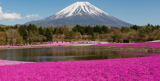 Květinové zájezdy do Japonska