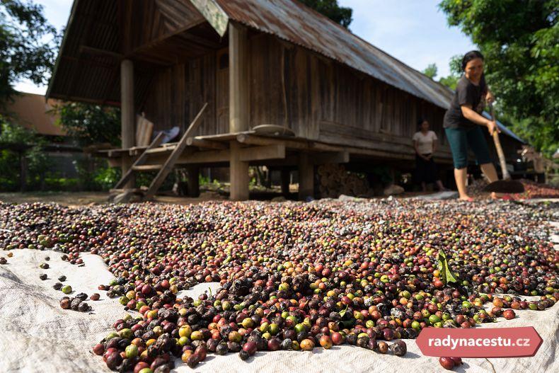 Zpracování kávy ve Vietnamu