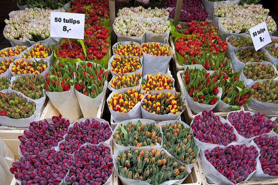 Nizozemí - květinový trh v Amsterdamu