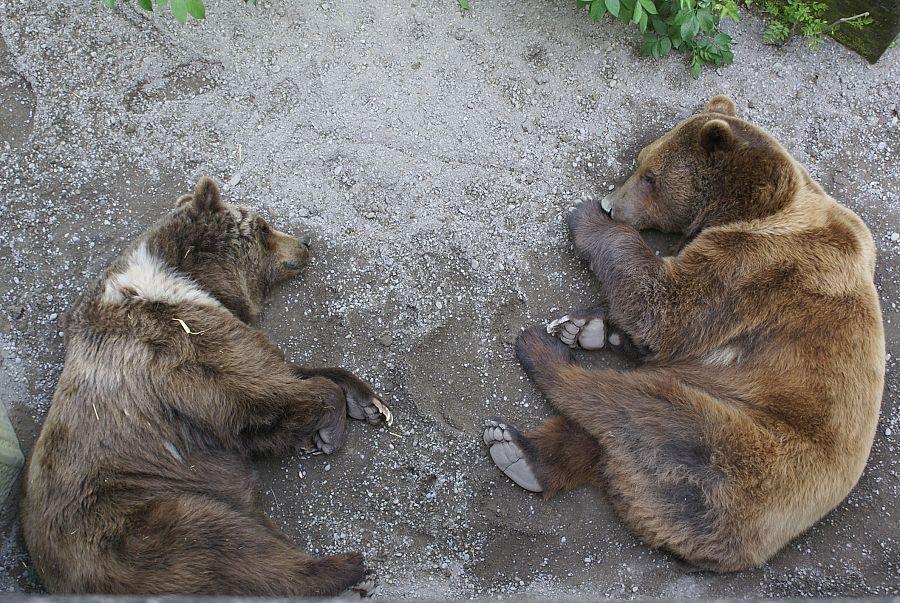 Bern - Medvědí park