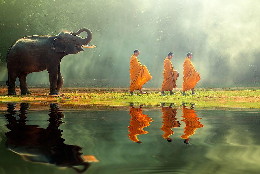 Thajsko_sloni