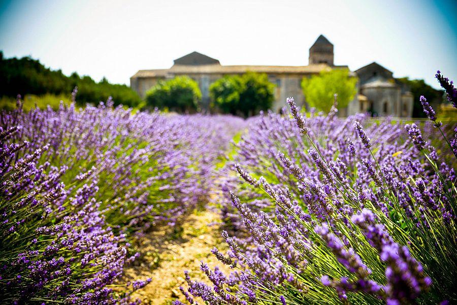 Provence_levandule_Radynacestu_Pa_vel_Spurek.jpg