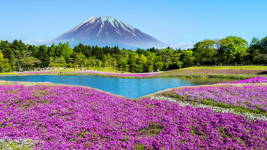 Japonsko_Fudzi_slavnost_Shibazakura.jpg