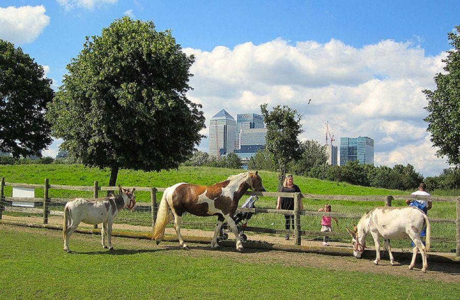 Mudchute Park and Farm