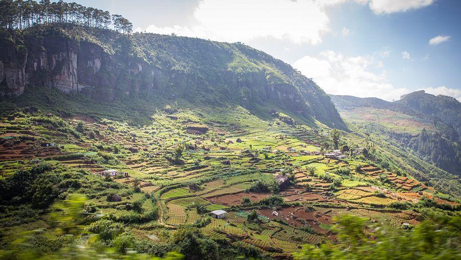 Sri_Lanka_plantaze_hory.jpg